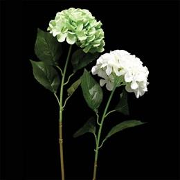Single Hydrangea Flower