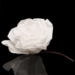 White Foam Rose