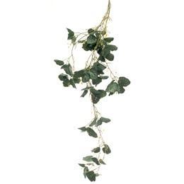 Green Ivy Bunch