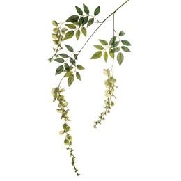 Wisteria Blossom - Green