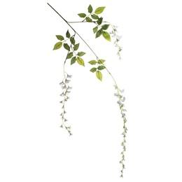 Wisteria Blossom - White