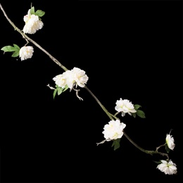 Peony Floral Vine - Cream