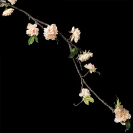 Peony Floral Vine - Light Pink