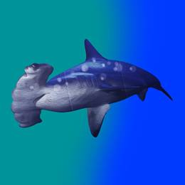 Hammerhead Shark Cutout Kit