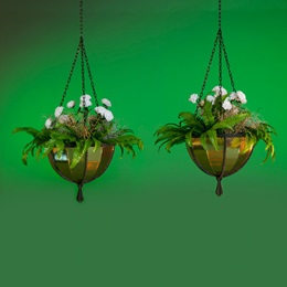 Golden Magic Hanging Baskets Kit (set of 2)