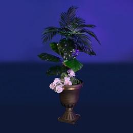 Desert Blooms Planter Kit